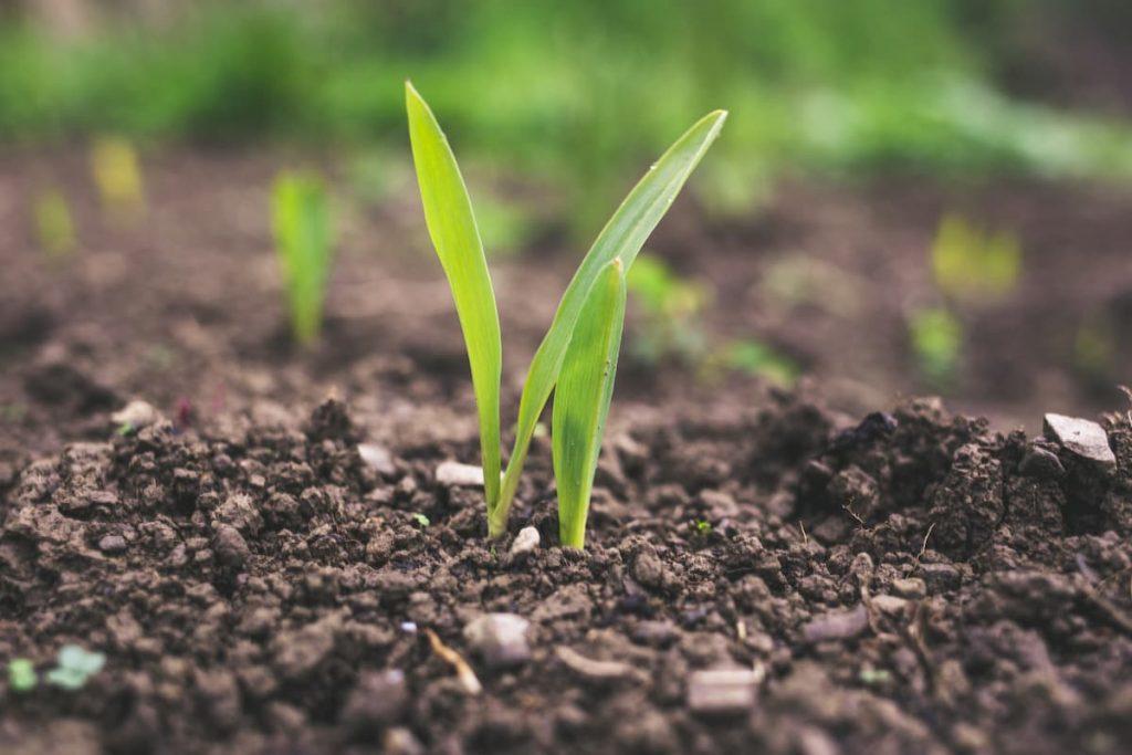 Необходимостта от препарати за борба с вредителите по растенията